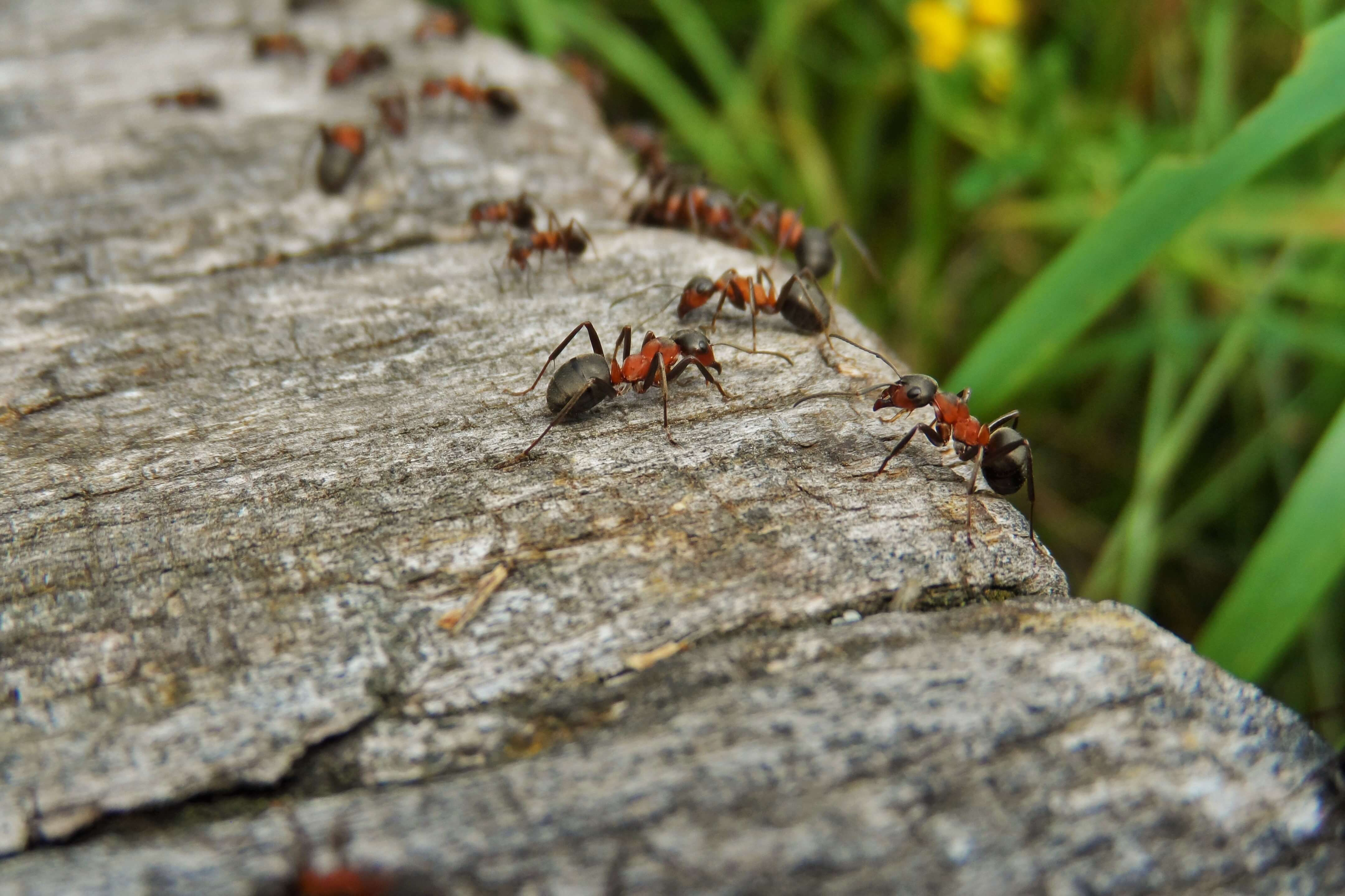 Stop hormigas! - Revista Mi Jardín